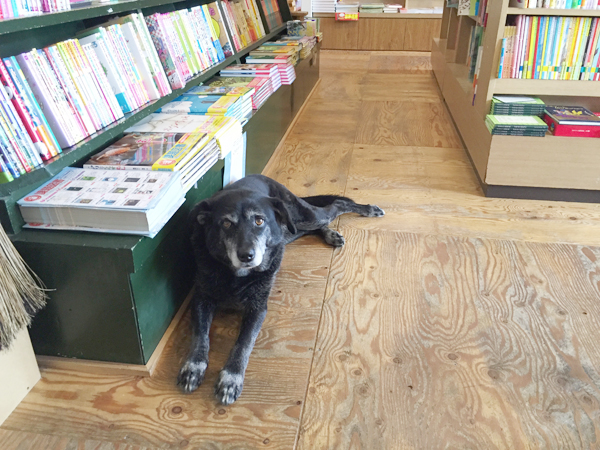 唐突だが、看板犬のキリコちゃん14歳。出迎えてくれる。